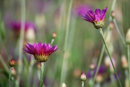 purple flowers in the meadow