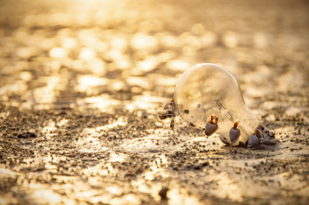 Incandescent light bulb on the beach with sunset