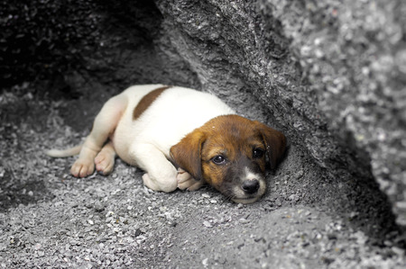 somebody: Homeless and hungry puppy abandoned stay at the hole