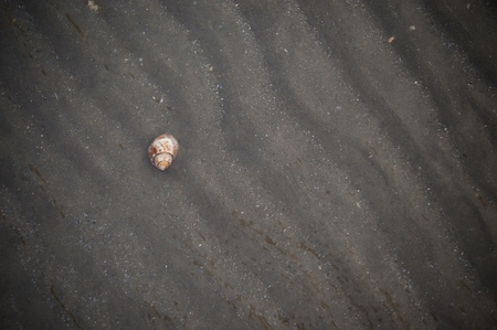 Blurry background of shell on the sand texture