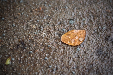 Close up of dry leaf on pavement after the rain
