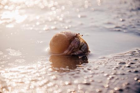 Hermit crap on the sand beach