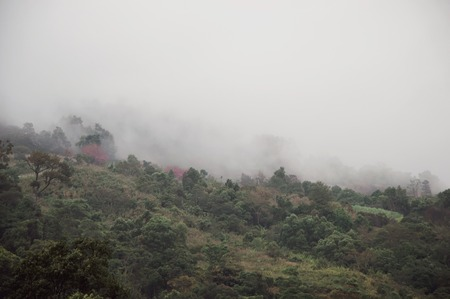 View of foggy mountain after the raining day