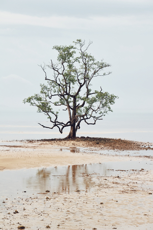 View of alone tree at the lake Banco de Imagens - 123010586