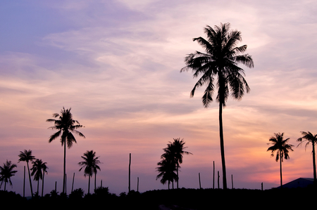Silhouette of coconut tree with twilight sky