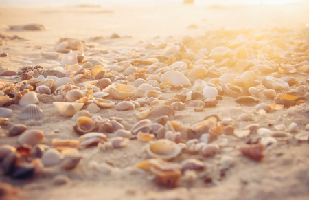 Seashell on the beach in the sunset time