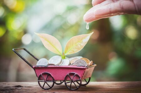 Close up of womans hand nurturing and watering a young plants growing in saving coins in the wheel barrow for business concept