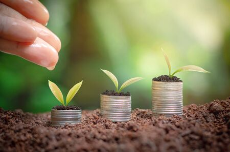 Close up of womans hand nurturing and watering a young plants is growing up on stack of coins for business investment or saving concept