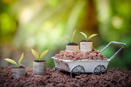 Young plants is growing up on stack of coins for business investment or saving concept Imagens