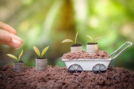 Close up of woman's hand nurturing and watering a young plants is growing up on stack of coins for business investment or saving concept