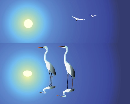 blue heron: Two white herons standing in water against the blue solar sky