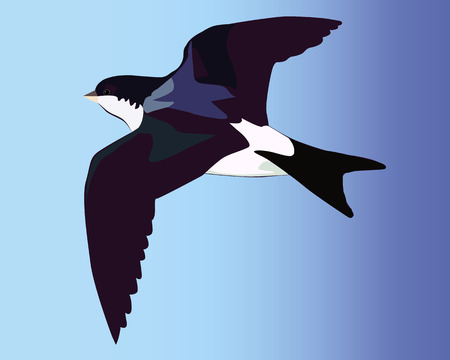 Flying swallow on a blue background Иллюстрация