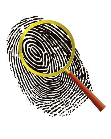 scrutiny: Huellas digitales bajo una lupa sobre un fondo blanco