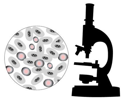 microbiologia: Silueta de un microscopio con la imagen de bacterias sobre un fondo blanco Vectores