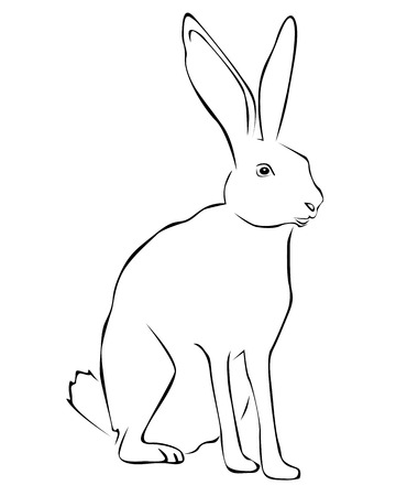 jackrabbit: Tracing of a hare on a white background