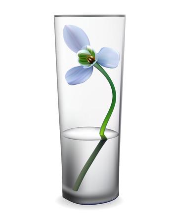 snowdrop: snowdrop flower in a glass vase