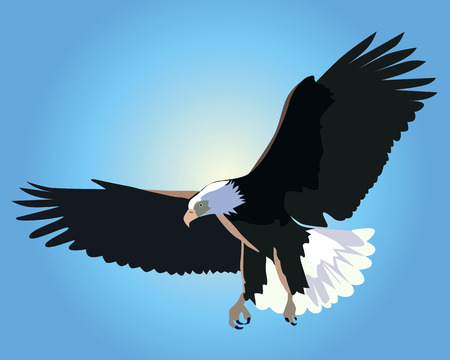 halcones: volando el �guila calva sobre un fondo de cielo azul Vectores