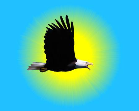 bald eagle against the sunny sky