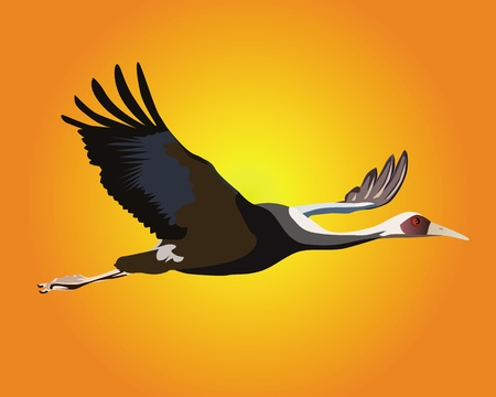 egret: heron flying against an orange sky
