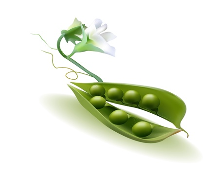 pod peas with a flower on a white background