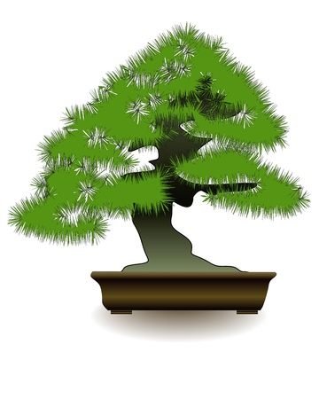 Japanese bonsai  tree  on white background Vector