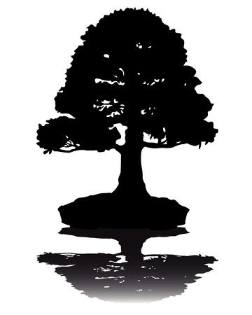 Japanse bonsai boom silhouet op witte achtergrond