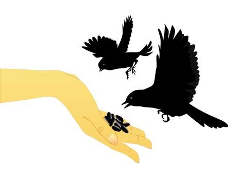 oiseaux se nourrir de leurs mains sur un fond blanc Vecteurs