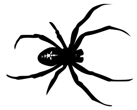 black silhouette of a spider on a white background Banco de Imagens - 9934739