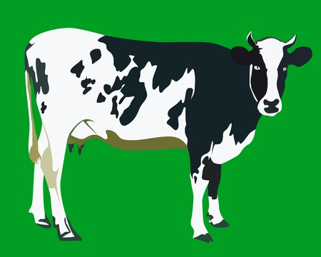 holstein: spotted cow on a green background Illustration