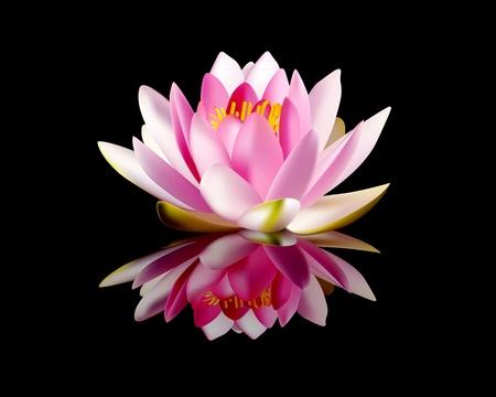 reflectie water: roze waterlelie op een zwarte achtergrond