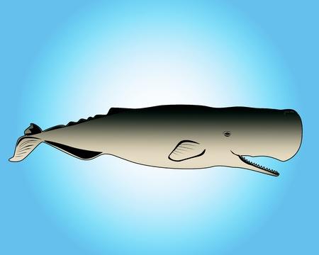 ballena azul: cachalot con la boca abierta en un fondo azul Vectores