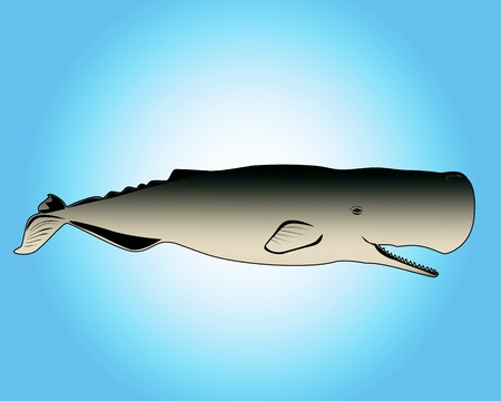 blue whale: cachalot with open mouth on a blue background
