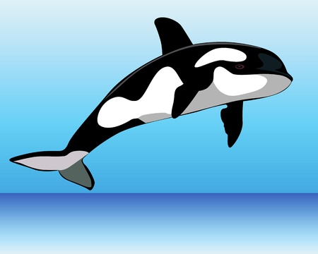 'killer whale': Killer Whale over the water on a blue background