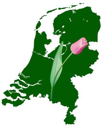 Map of Holland in green with a tulip on a white background