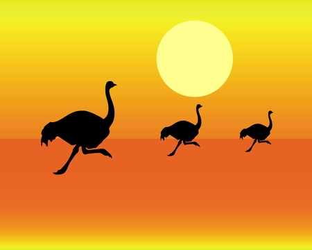 black silhouettes of running ostrich on an orange background Stock Vector - 13247640