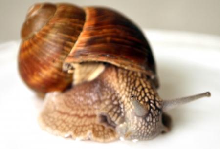 sluggish: Focus on the eye snail on a bright background