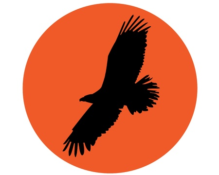 eagle flying: silhouette of a flying eagle on the round orange background