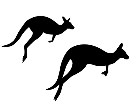 roo: Two kangaroos on a white background