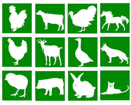 domestic animals in the green squares on a white background