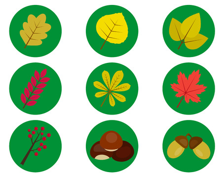 dry flowers: different leaves of trees in the green circles on a white background