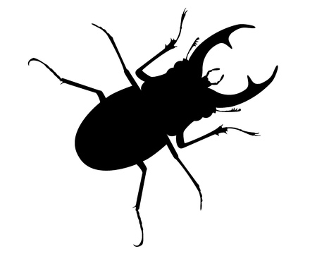 figurative: Rogachi or an deer beetles living in the forest Illustration