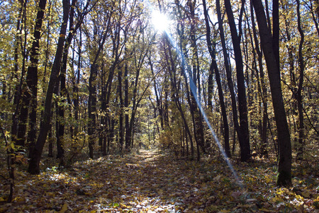 forest path: forest path sunbeam yellow leaves of the trees the month of October Stock Photo