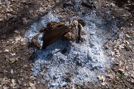 ash: burned tree root around the root ash