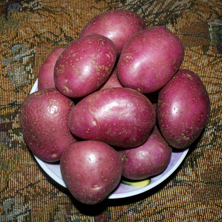 ware: fresh potatoes of red color lying in ware