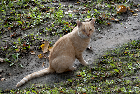 cat with one eye sitting on the ground and looks 스톡 콘텐츠