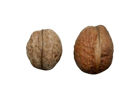 two inshell walnuts on a white background