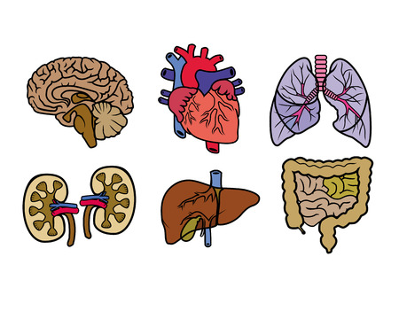 bile: vector color anatomy organs on a white background Illustration