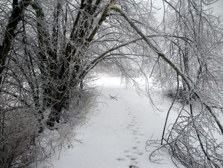 Wintry Path Stock Photo - 12954033