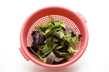 Salad leaves in the culinary sieve Stock Photo