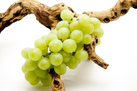 Wine grapes with root
